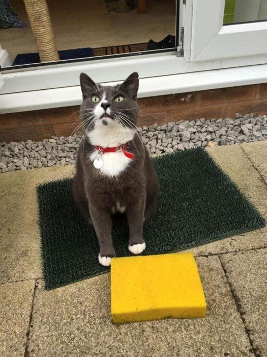 Gato regalo esponja