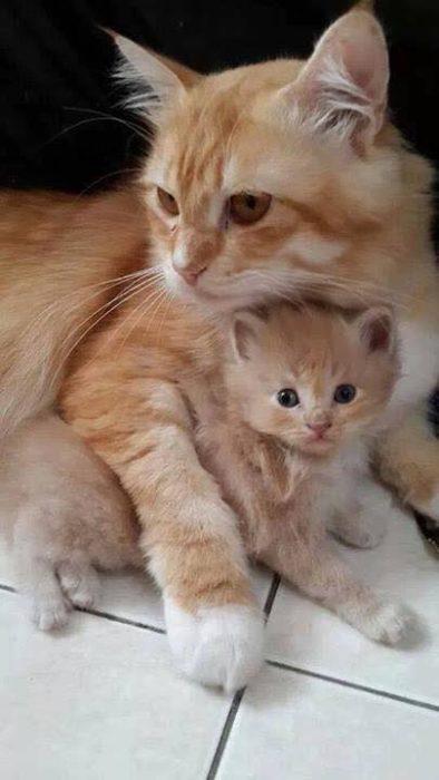 gatitos color amarillo abrazo