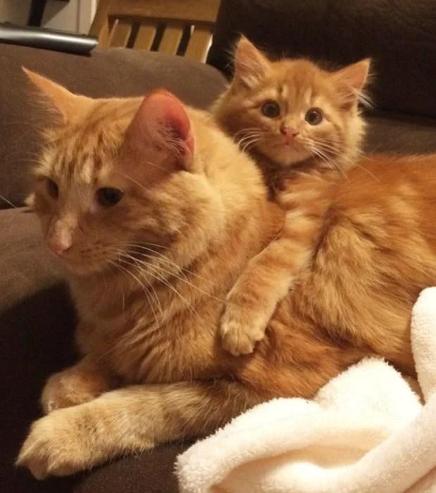 abrazando a mamá gato