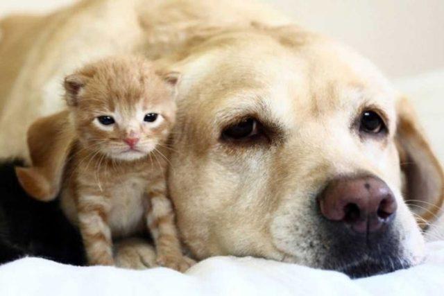 perro y gatito familia