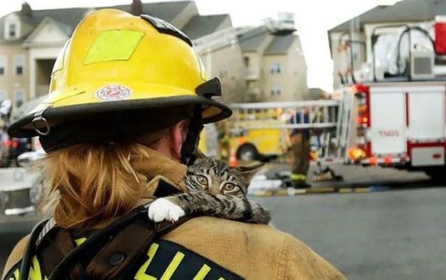 gato rescate de bombero