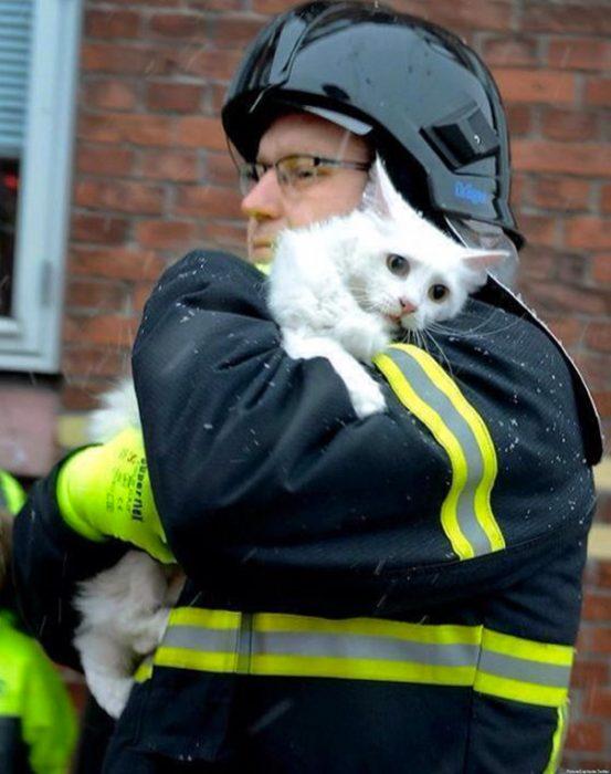 bombero salvando gato