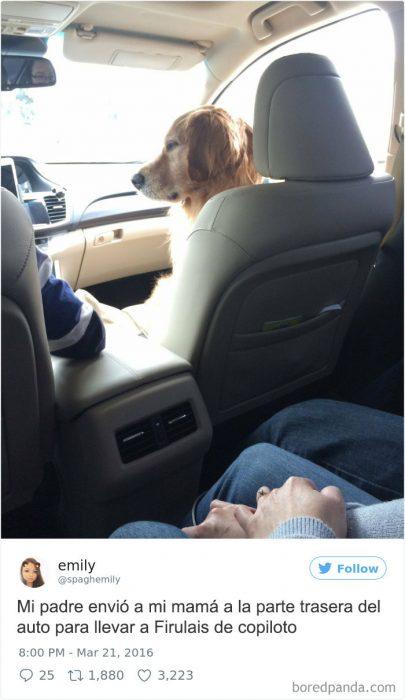 firulais de copiloto