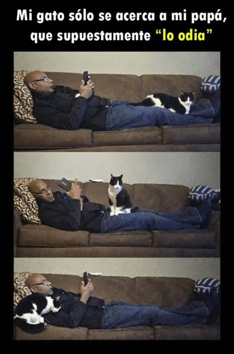 Gato se aproxima a señor