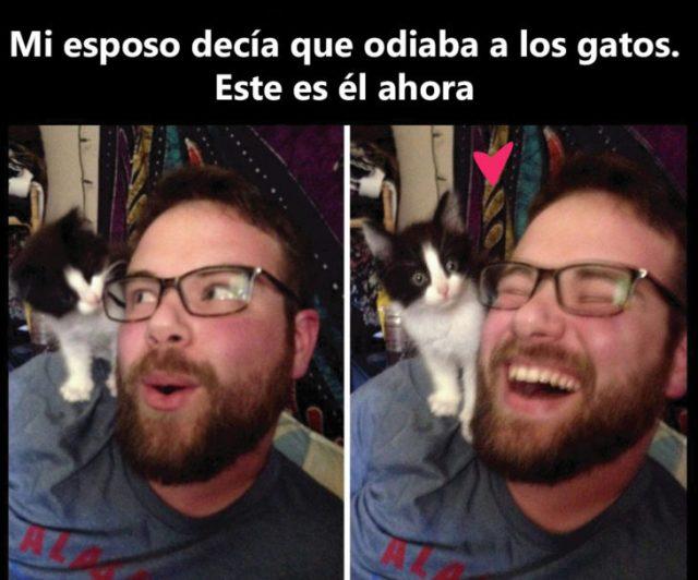 Mi novio odiaba a los gatos