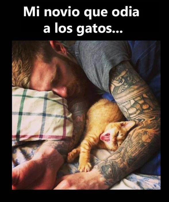 Novio tatuado gatitos dormidos