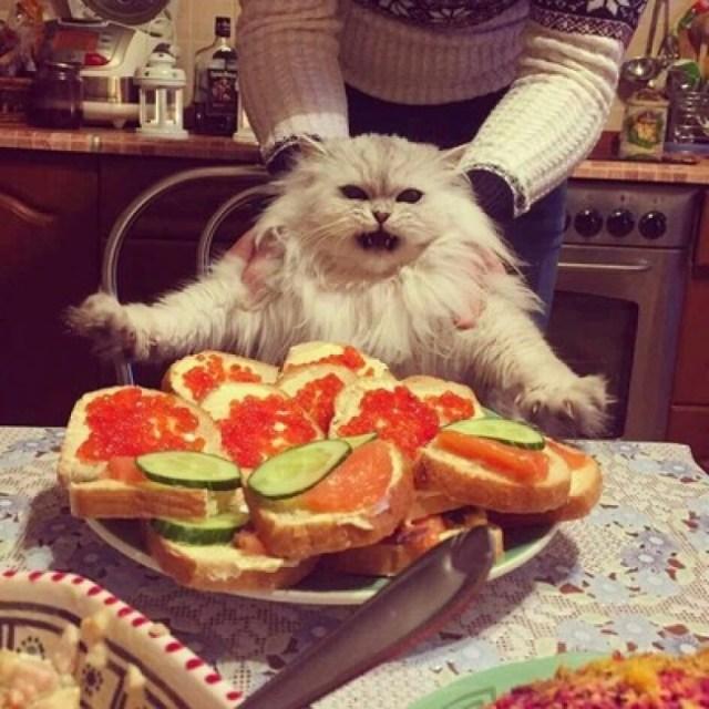 gato loco