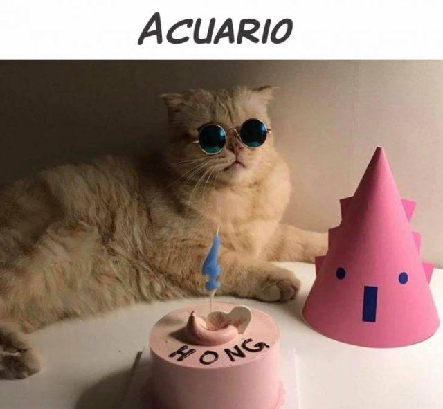 acuario gato