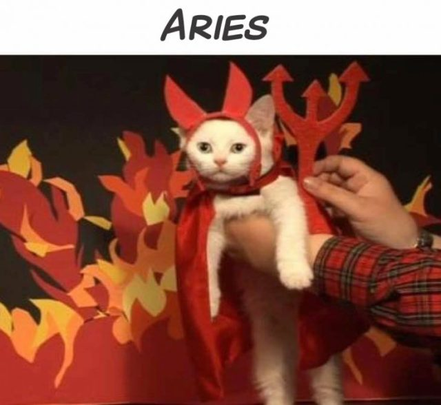 aries gato
