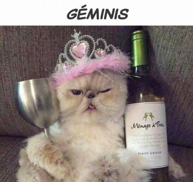 géminis gato