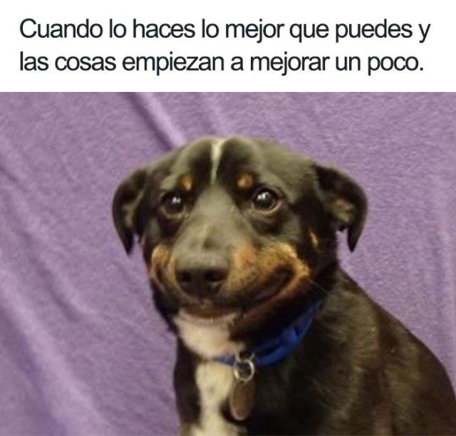 perrito memes