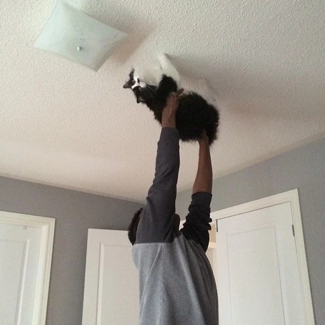gato marido
