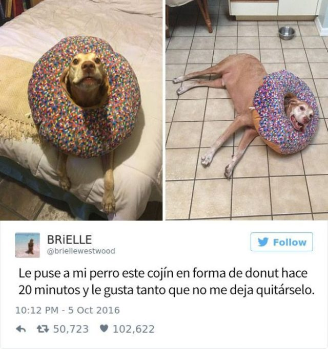 perrito dona