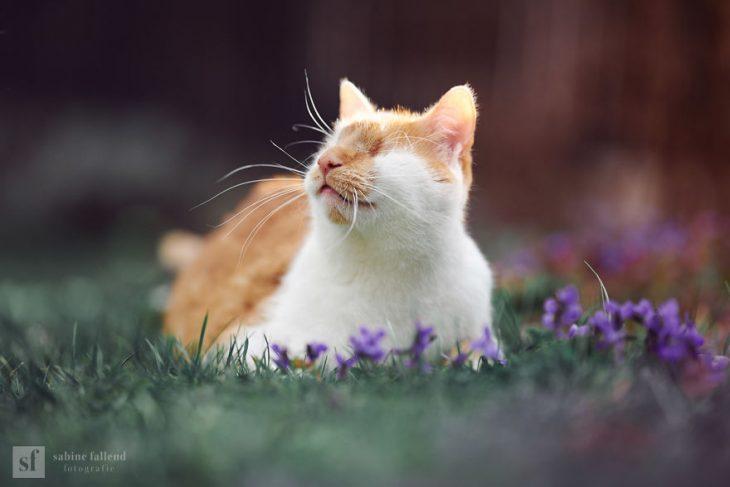Gatito que naci%C3%B3 sin ojos recreoviral 1 730x487 - Conoce a Kazou, un gatito sin ojos que se robará tu corazón