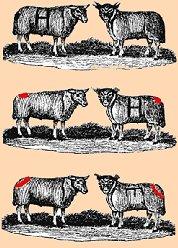 ir por lana