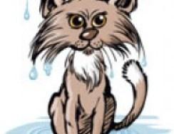 gato-al-agua_thumb_d