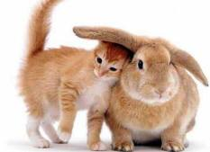 gato-por-liebre2