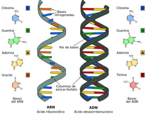 RNA-DNA--510x400