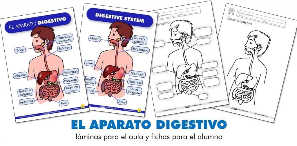 El Aparato Digestivo Láminas Para El Aula Y Fichas Para El Alumno