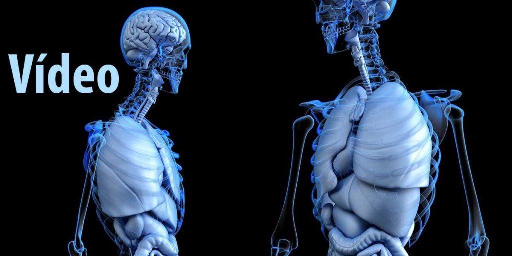 Vídeo Repaso de clase: Niveles de organización del cuerpo humano 3º ESO