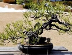 盆栽の魅力