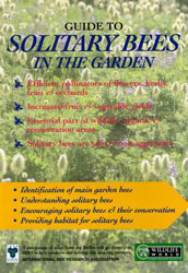 Guide to Solitary Bees