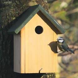 Pembroke Nest Box