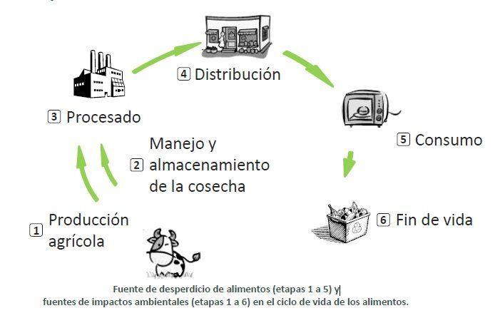 Desperdicio de comida  Gestin de residuos  Soluciones