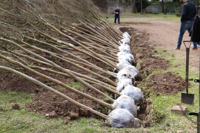 La Secretaria de Ambiente tiene planes de restauración e implantación de bosques.