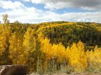 aspens-changing-color
