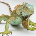 WHAT DOES IT MEAN WHEN YOU DREAM ABOUT LIZARDS