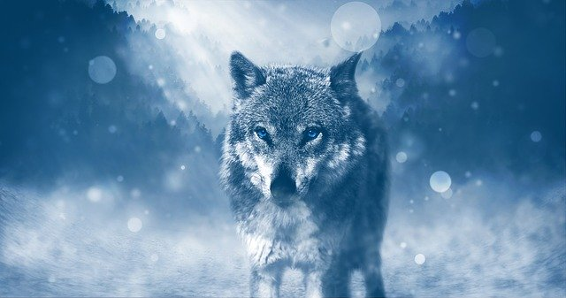 Wolf symbolism in the bible