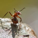 Spiritual meaning of ants in house