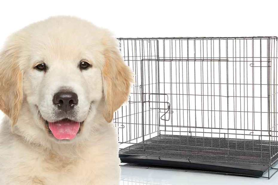 Puppy Keeps Peeing In Crate