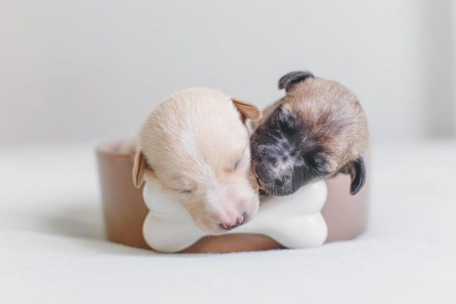 What Supplies Do I Need For Whelping Puppies? [2020] Experts Tips
