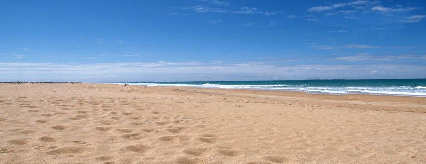 Playa entre Conil y el Palmar en Cdiz  RedCaninaes