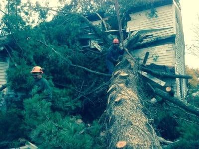 trees in winter hazard damages