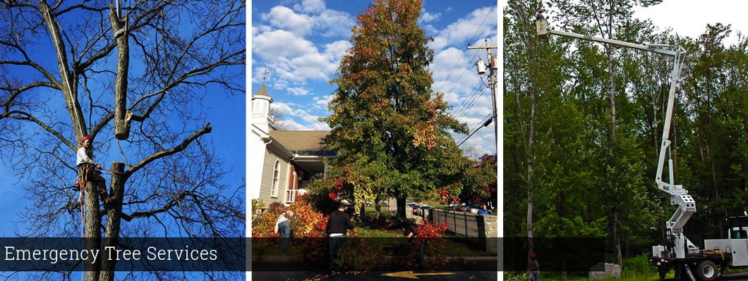 Tree Removal & Tree Services