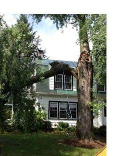 detail-tree-brace-prevention