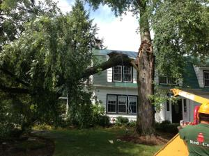 have your trees inspected before buying a house