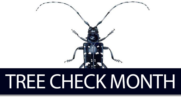 Asian Longhorned Beetle: August Is Tree Check Month