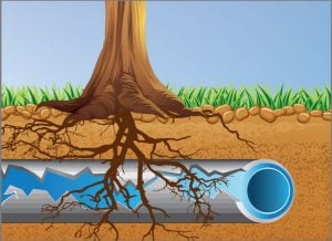 tree roots in pipes