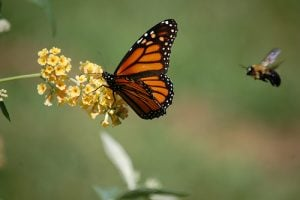 foster wildlife to create sustainable landscape