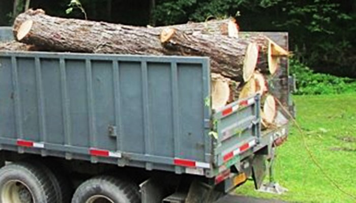 Can I Use Trees For Firewood?