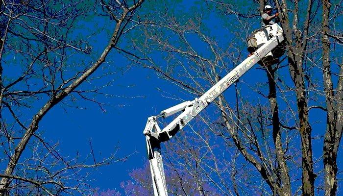 arborist pruning trees