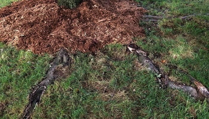 Here's How To Deal With Surface Roots