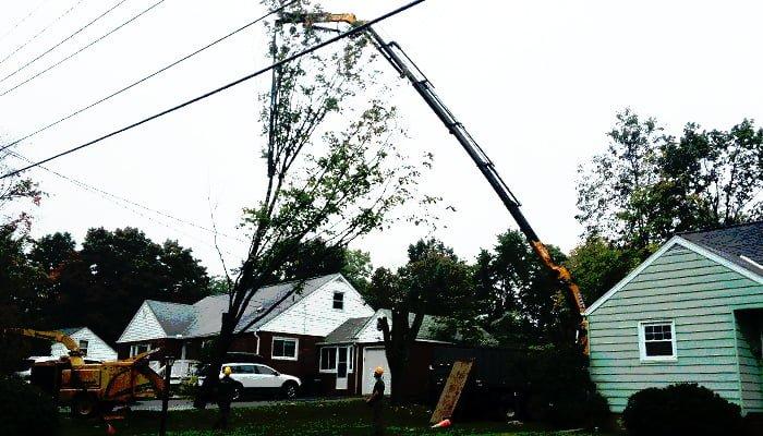Tree Removal Service FAQ's