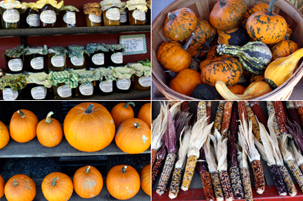 Pumpkins at Farm Stand