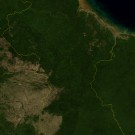 When will the multi-stakeholder process for Guyana's forests begin?