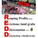 Will REDD protect forests, or allow business as usual to continue?